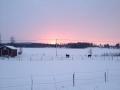 Hästar i solnedgång